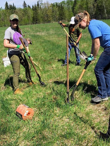 The team planted a total of 75 cedar trees on the WELRP farm ©2020 Thomasina Roth-Krosnoski
